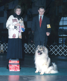 J. J. in AKC, CKC, UKC and International shows