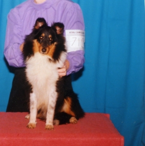 Int. Puppy Champ.Caviar's Small and Wonderful