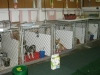 kennel for small dogs