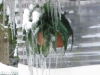 Icicles on hanging plant.  Maybe I'll move to Florida.  Brrrr.