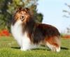 Mult. BISS Bronze GCH Mystique Wikked Pursuit, grandson